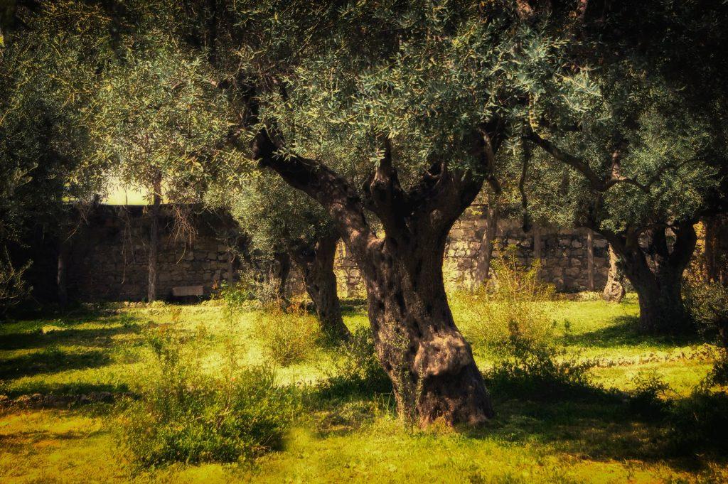 Part 8 - Gethsemane